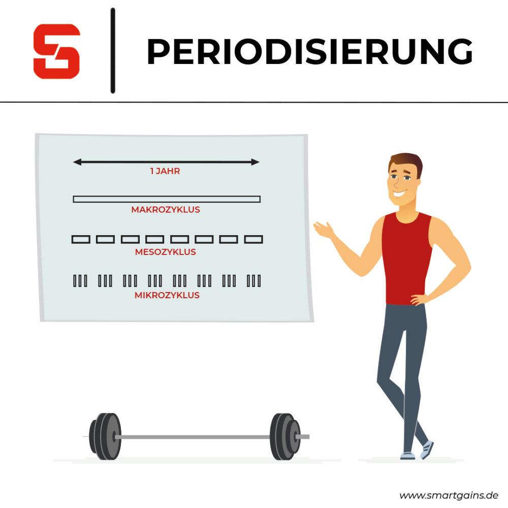 Periodisierung- langfristig effektives Training - SMARTGAINS